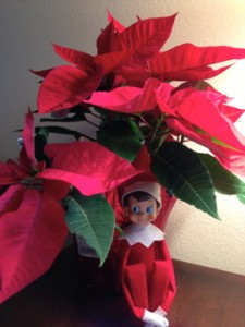 Elf on the shelf, pointsettia
