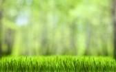 green grass plant